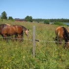horses-at-lergrav-13