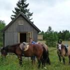 horses-strandstugangp